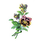 Taboo Tattoo 2 Elegant Brilliant Pink and Yellow Pansy Temporary Tattoo, various sizes available Design 1