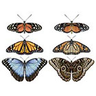 Ombeyond TEMPORARY TATTOO - Set of 6 Butterflies / Flutters of Butterflies / Pair of Monarch Butterflies