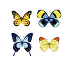 Taboo Tattoo 4 Watercolor Butterfly Temporary Tattoo, various sizes available Perfect for wrists fingers and ankles birthdays style 1