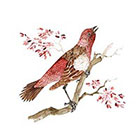 Arrow Tattoo Red Bird Watercolor temporary tattoo Pattern Tattoo Temporary Tattoo wrist ankle body sticker fake tattoo