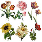 Ombeyond TEMPORARY TATTOO - Set of 4 OR Set of 7 Vintage Florals
