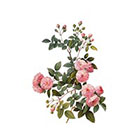 Arrow Tattoo Tea Rose temporary tattoo Pattern Tattoo Temporary Tattoo wrist ankle body sticker fake tattoo pink french