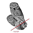 WildLifeDream Vintage owls - Temporary tattoo