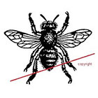 WildLifeDream Vintage bee - Temporary tattoo