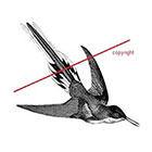 WildLifeDream Vintage hummingbird - Temporary tattoo