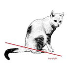 WildLifeDream White cat - temporary tattoo