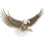 TattooGirlsRule Large Bald Eagle Temporary Tattoo #D8018