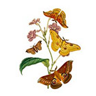 Arrow Tattoo Large Vintage Butterflies temporary tattoo Pattern Tattoo Temporary Tattoo wrist ankle body sticker fake tattoo luna moth
