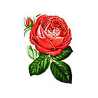 Tattoorary Small vintage rose temporary tattoo