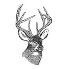 Tattoorary Temporary tattoo vintage deer head