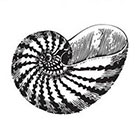 Tattoorary Vintage seashell temporary tattoo
