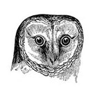 Tattoorary Vintage owl temporary tattoo