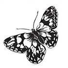 Tattoorary Vintage butterfly temporary tattoo