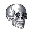 Tattoorary Vintage skull temporary tattoo