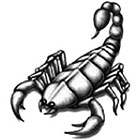 TattooGirlsRule Black Scorpion Temporary Tattoo (#SM553)