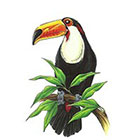 TattooGirlsRule Large Toucan Temporary Tattoo (#D8040)