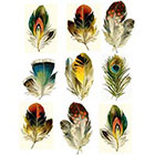 WildLifeDream Set of 9 feathers - Temporary tattoos