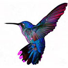 WildLifeDream Hummingbird - Temporary Tattoo
