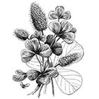 WildLifeDream Vintage flowers - Temporary tattoo