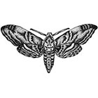 WildLifeDream Old school moth - Temporary tattoo